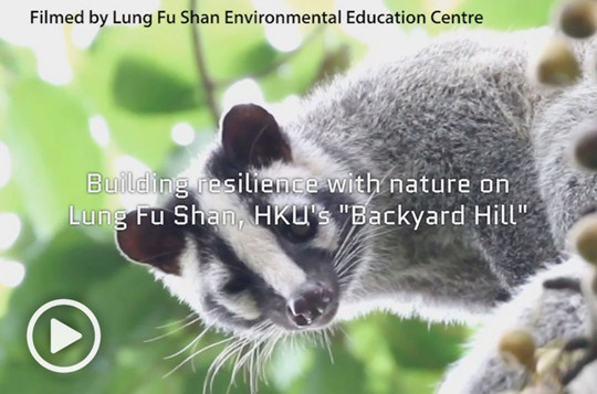 "Building resilience with nature on Lung Fu Shan, HKU's ""Backyard Hill"""