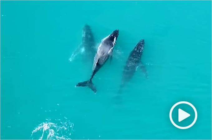 eConnect: Whaling: Pro-vs-Anti | HKU AI Lawyer | World première: Two Miniatures | Startup for Sight Loss | 慢性腎病知多少 | 未來的香港教育 | 巨額經濟紓困計劃